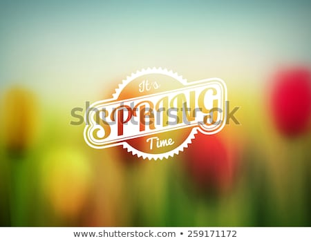 Bright red tulip flower blurred in background. stock photo © Zhukow