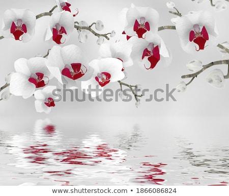 синий · орхидеи · отражение · воды · белый · свадьба - Сток-фото © nejron