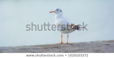 Retrato blanco gaviota verano día naturaleza Foto stock © OleksandrO