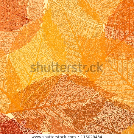 fall coloured leaves eps 8 vector file included stock photo © beholdereye
