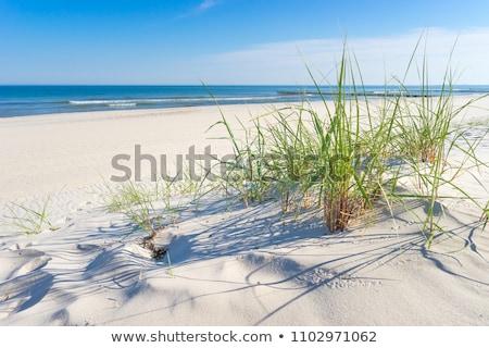 Mar báltico praia ilha popular céu natureza Foto stock © meinzahn