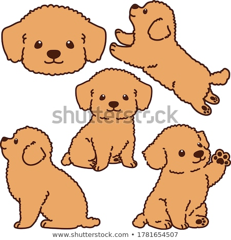 Chiot caniche blanche jeunes animaux cute Photo stock © cynoclub