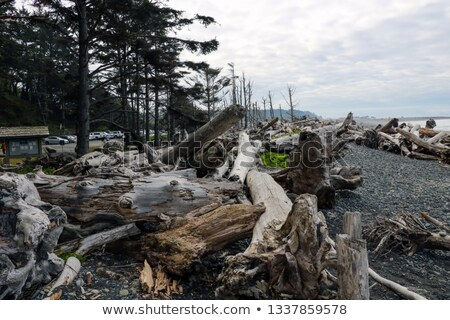 sea stack on a sheltered cove stock photo © wildnerdpix