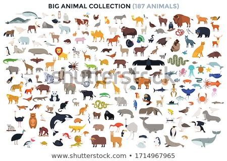животные набор сельскохозяйственных животных кролик корова куриные Сток-фото © laschi