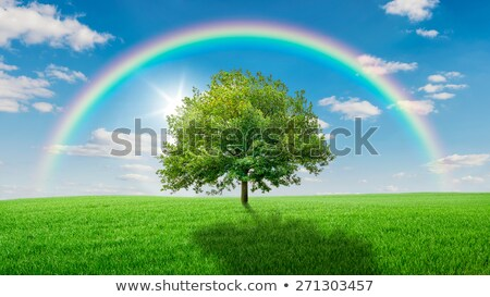 Oak tree on a green meadow covered by a rainbow stock photo © Zerbor