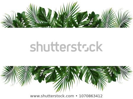 vallen · bladeren · frame · exemplaar · ruimte · eps · vector - stockfoto © karandaev
