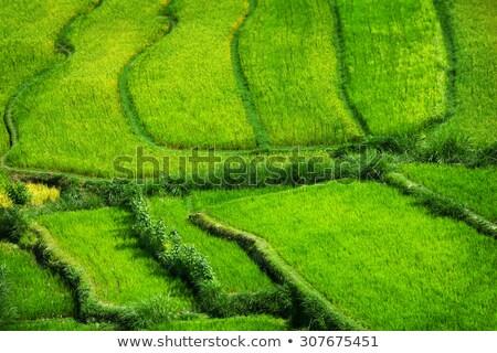Délkelet-Ázsia · zöld · Föld · Föld · izolált · fekete - stock fotó © pzaxe