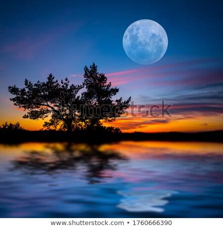 fogueira · água · floresta · noite · céu · madeira - foto stock © mikko