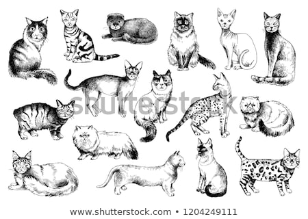 Rabbit And Cat Sketch Stock photo © mart