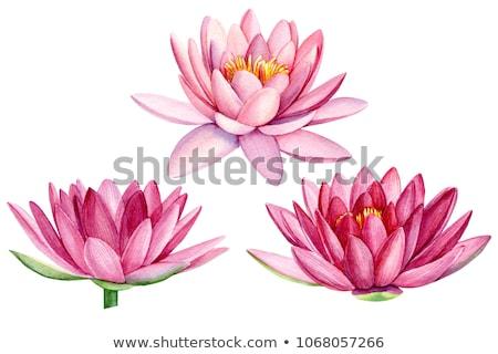 Watercolor pink lotus Stock photo © artibelka