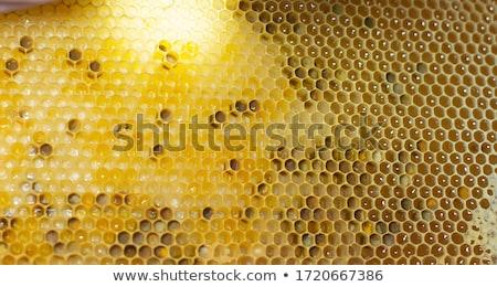 Honeybee on a comb Stock photo © Digifoodstock