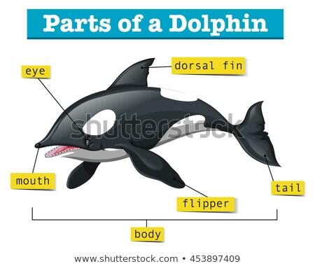 диаграмма дельфин иллюстрация фон Сток-фото © bluering