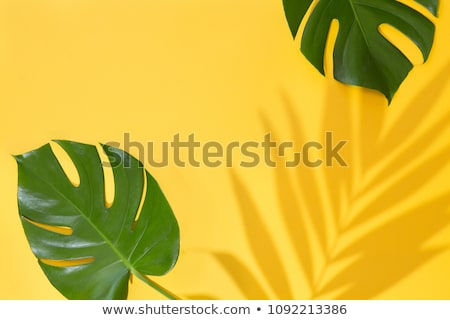 Topview of leaves Stock photo © bluering