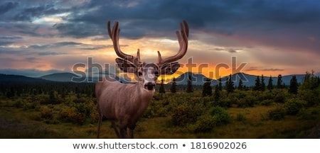 A male deer Stock photo © bluering