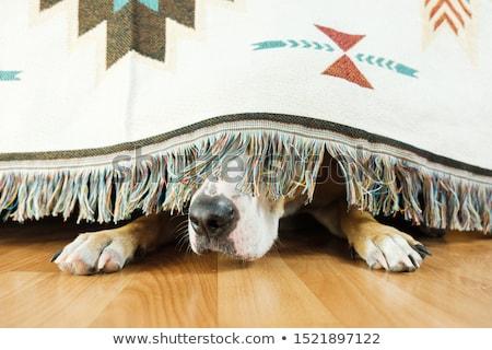 hiding stock photo © pressmaster