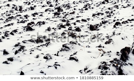 Frozen plowed agricultural field covered with frost Stock photo © stevanovicigor