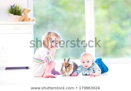 Girl playing with his pet big rabbit stock photo © artfotodima