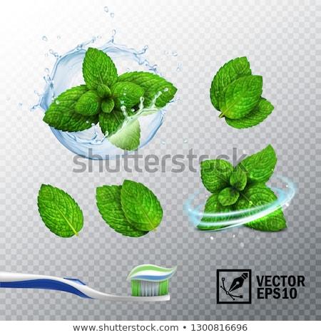 Cepillo de dientes menta aislado blanco fondo medicina Foto stock © lucia_fox