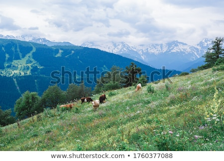 tehenek · zöld · mező · hegyek · farm · tájkép - stock fotó © kotenko