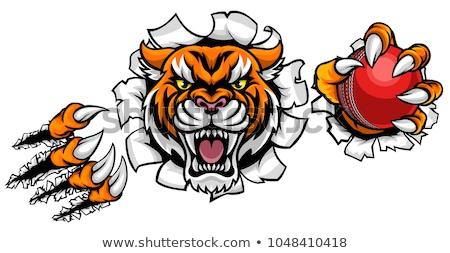 tiger holding cricket ball breaking background stock photo © krisdog