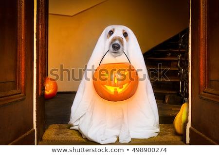 щенков · Хэллоуин · белый · Spider · ПЭТ · белом · фоне - Сток-фото © cynoclub