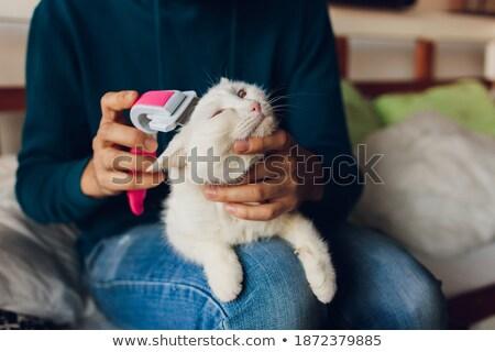mały · koteczek · strony · szary · dziecko - zdjęcia stock © ilona75