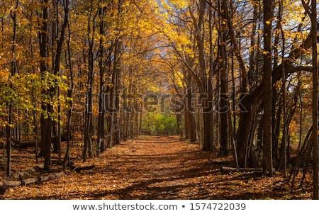 Tarde outono nuvens madeira floresta natureza Foto stock © Pozn