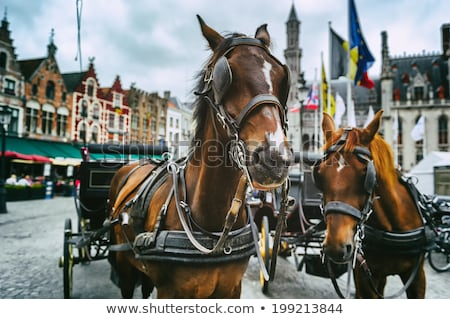 horses and carriage on historic europe centre square stock photo © fotoduki
