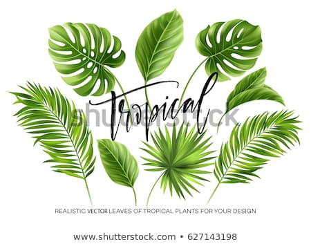 vector foliage set with tree leaves and plants and twigs stock photo © pravokrugulnik