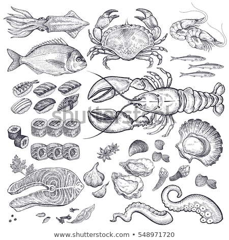 Mussel and Scallop Vector Vintage Illustration Stock photo © robuart