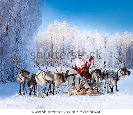 鹿 冬 森林 クリスマス 漫画 装飾された ストックフォト © liolle
