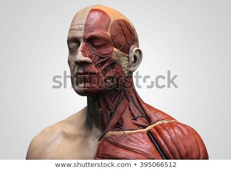 açmak · kafa · beyin · yalıtılmış · adam · çalışmak - stok fotoğraf © maryvalery