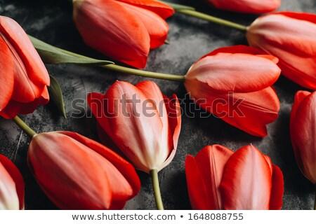 kartkę · z · życzeniami · kwiaty · ogród · tekstury · górę - zdjęcia stock © unikpix