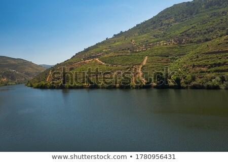 Liman şarap üzüm güzel bağ bölge Stok fotoğraf © ajn