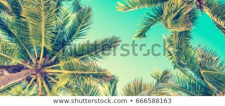 Palmen banner heldere tropische Blauw Stockfoto © alexaldo