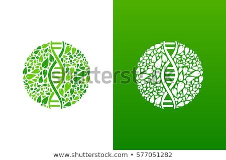 DNS genetikai ikon fa zöld levelek növény Stock fotó © marish