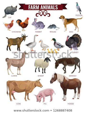 Pig and Sheep, Domestic Animals Farming Set Vector Stock photo © robuart