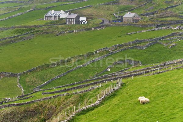 Stock fotó: ír · vidék · vidéki · jelenet · western · Írország · fű