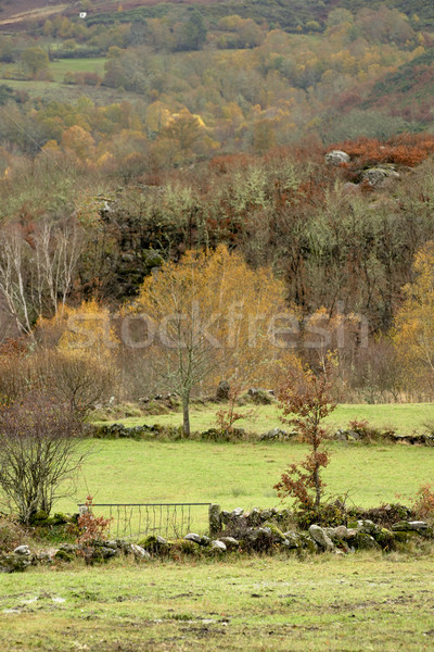 Autumn trees and meadows Stock photo © t3mujin