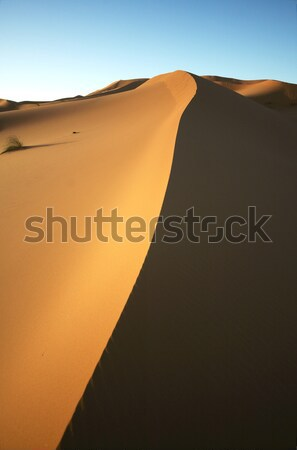 Sombra duna mitad manana sol paisaje Foto stock © t3mujin
