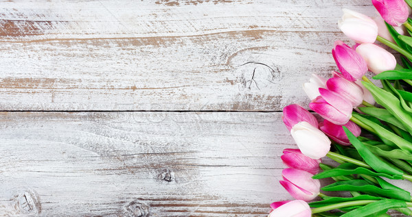 springtime pink tulips on white weathered wooden boards Stock photo © tab62
