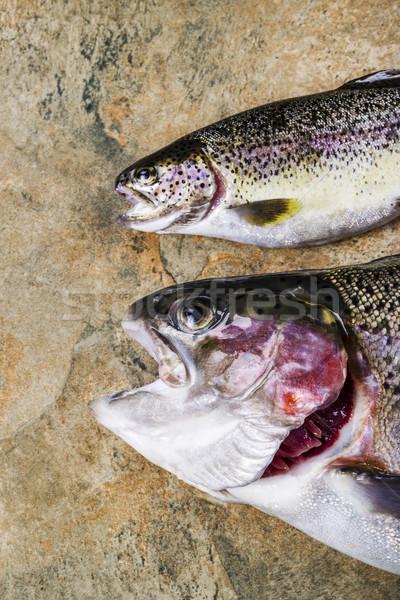 Vers forel steen twee regenboog natuurlijke Stockfoto © tab62