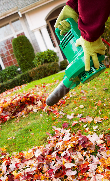 Electrical Blower Cleaning Leaves from Front Yard during Autumn  Stock photo © tab62