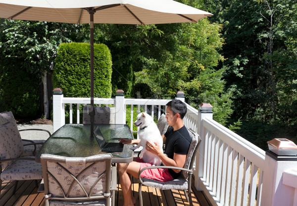 Genç evcil hayvan köpek çalışma ev sedir Stok fotoğraf © tab62