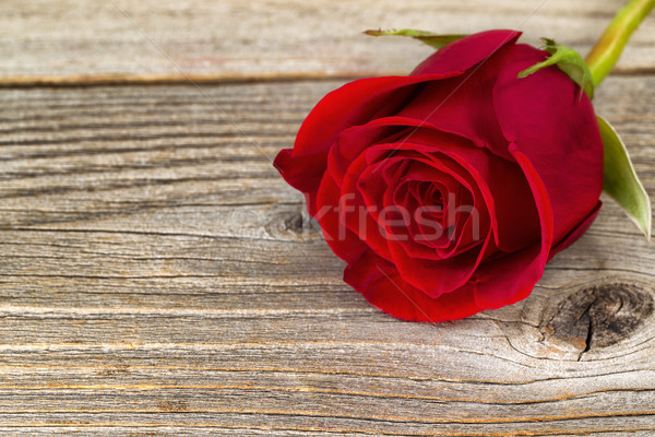 Single freshly cut red rose on rustic wood  Stock photo © tab62
