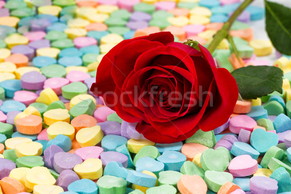 Single freshly cut red rose on colorful heart shaped candies Stock photo © tab62