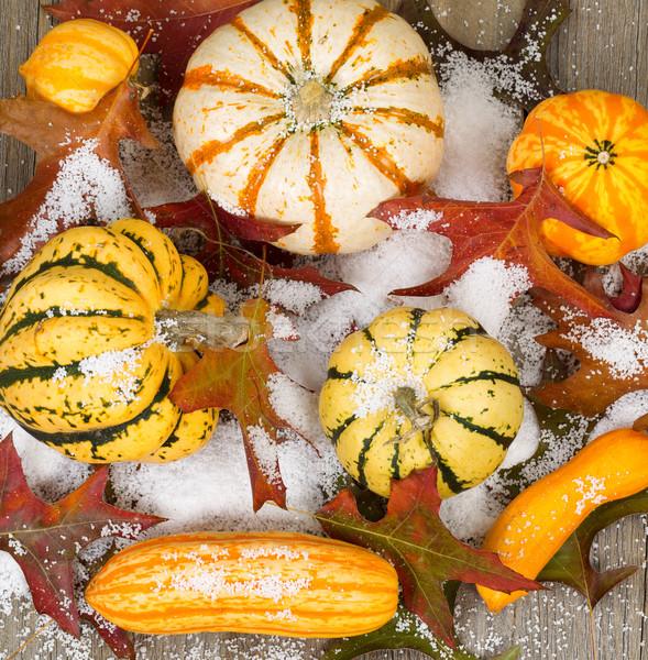 ősz díszítések tölgy levelek fedett hó Stock fotó © tab62