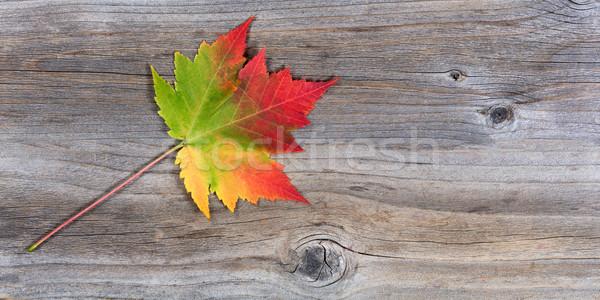 活気のある 秋 カエデの葉 素朴な 木材 ストックフォト © tab62