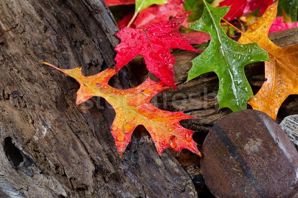 Molhado vibrante troncos brilhante Foto stock © tab62