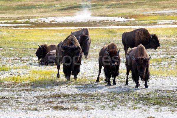 зрелый север американский гнева Сток-фото © tab62